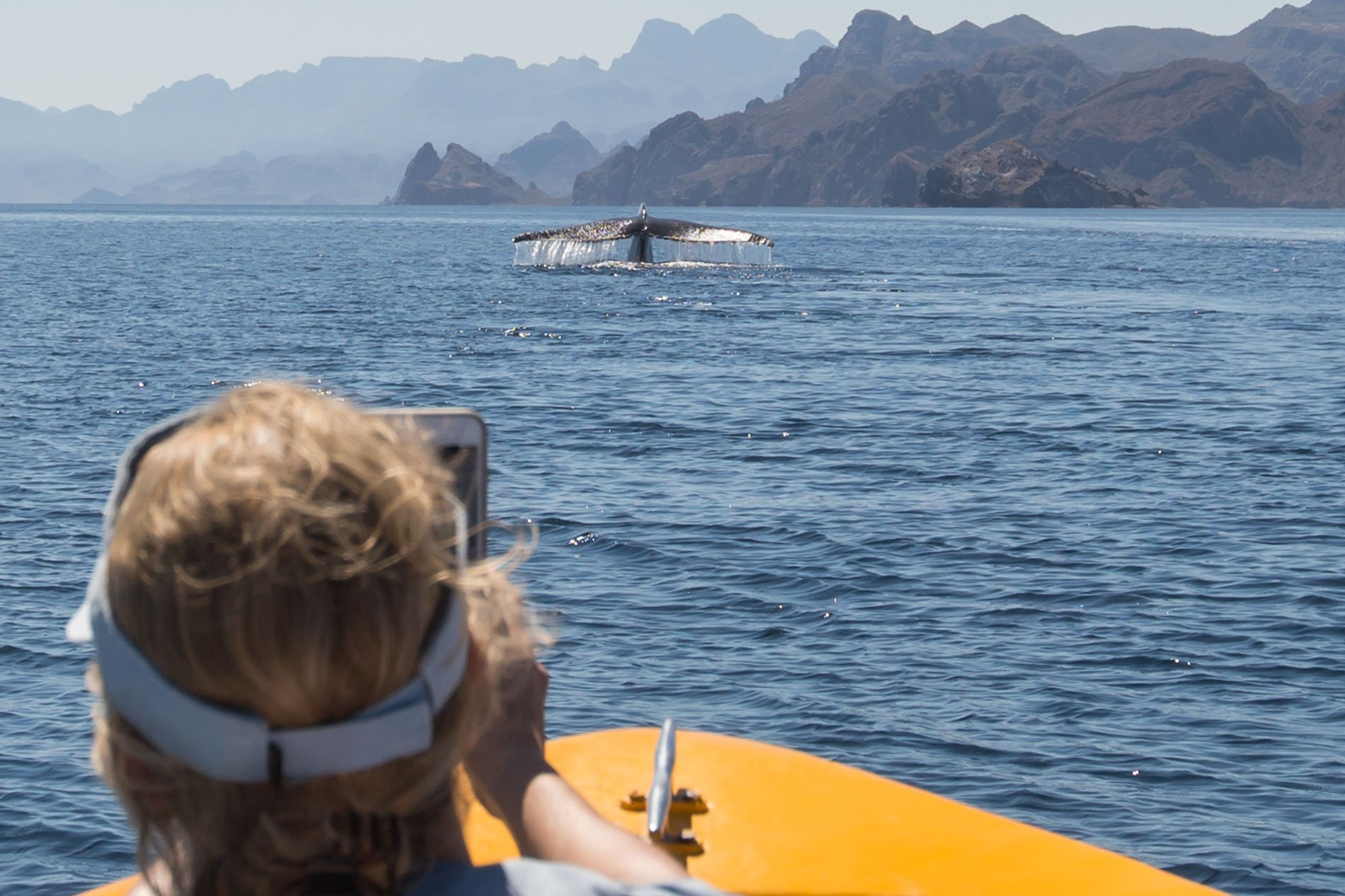 Coast + Islands with whale watching on the sea of cortez