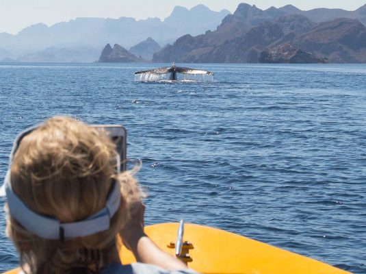 whale watching in baja mexico with paddling south